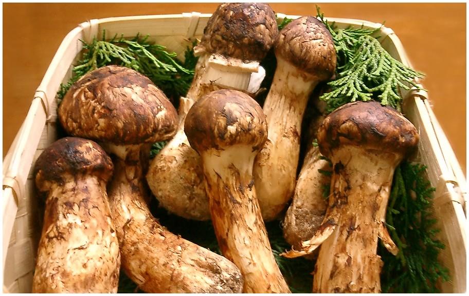 10kg of Matsutake Mushrooms