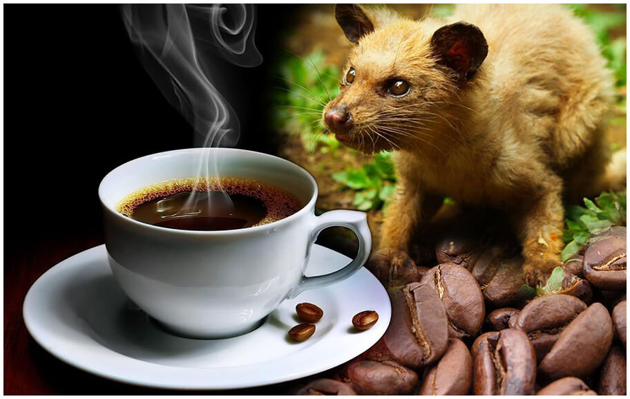 7 kgs of Kopi Luwak, world's most expensive coffee